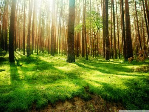 stunning-forest-wallpapers-1