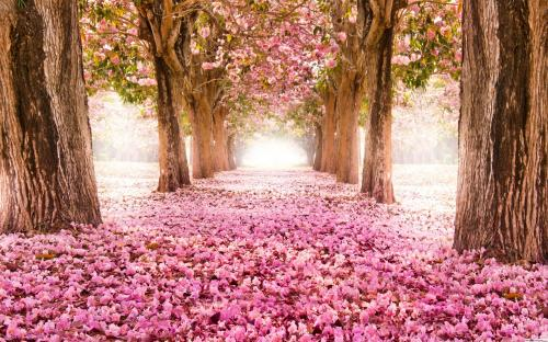 nature-tree-flower-way-wallpaper-1920x1200-19524_6
