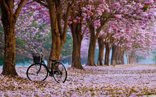 spring-blossoms-landscape-wallpaper-1920x1200-14687_6