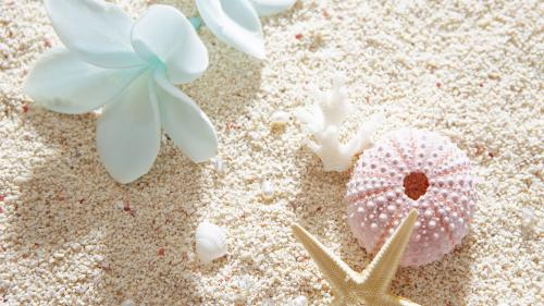 ecopetit.cat-seashell-wallpaper-214443