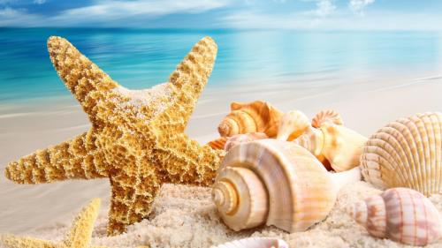 ecopetit.cat-seashell-wallpaper-214513