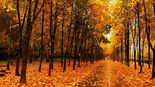 wallpapers-autumn-09